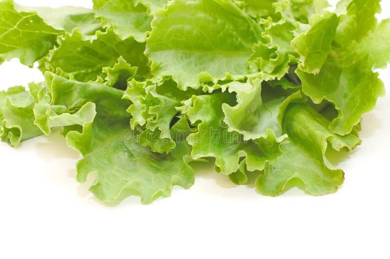 Salada verde fresca da alface fotos de stock