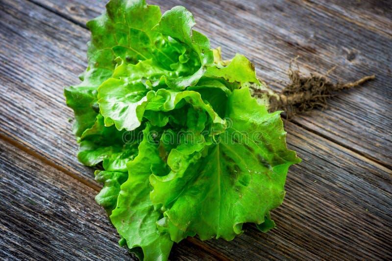 Salada verde orgânica fresca do jardim imagem de stock royalty free