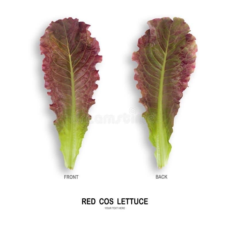 Salada VERMELHA da folha de COS isolada no fundo branco foto de stock