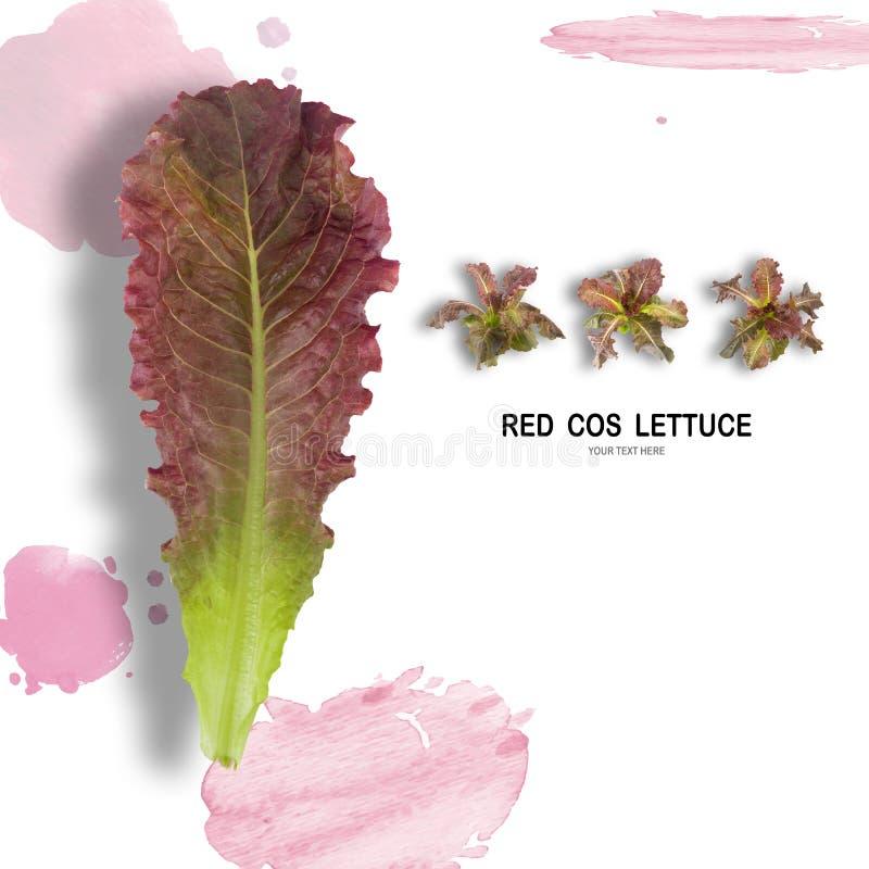 Salada VERMELHA da folha de COS isolada no fundo branco imagens de stock