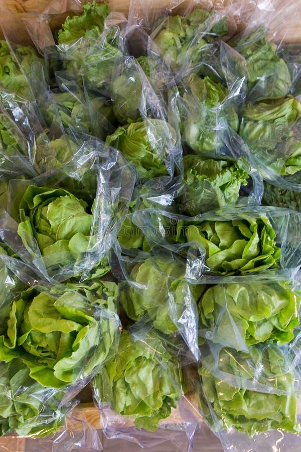 saladas do Gordo-vegetal fotografia de stock royalty free