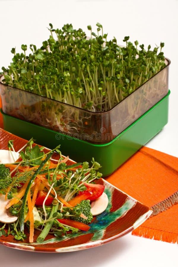 Salade avec des pousses image libre de droits