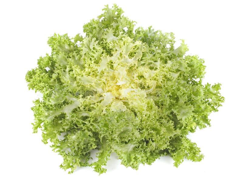 Salade de chicorée frisée e/scarole d'endive de Frisee photo libre de droits