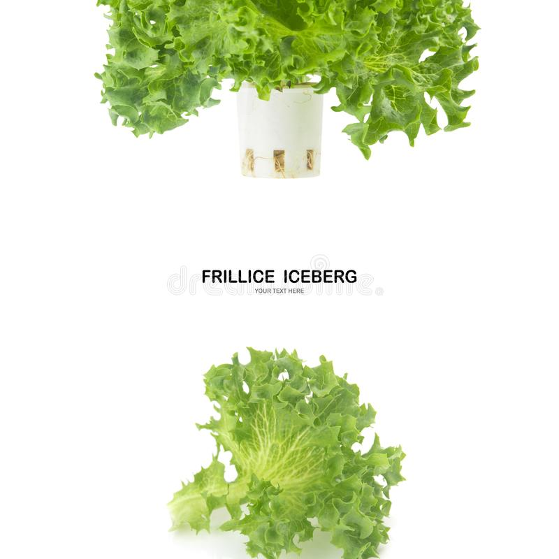 Salade de feuille d'ICEBERG de FRILLICE d'isolement sur le fond blanc photos stock