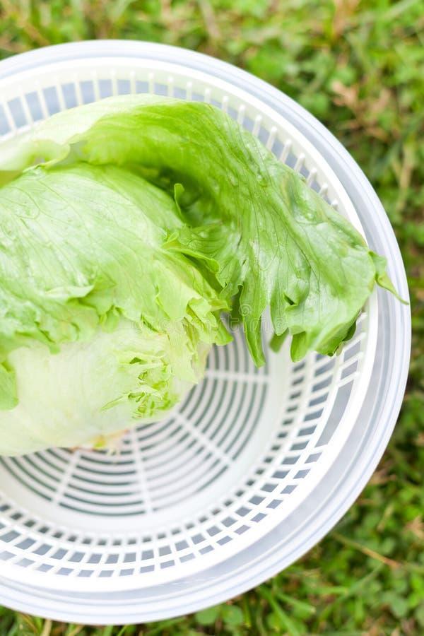 Salade de laitue dans le fileur photographie stock