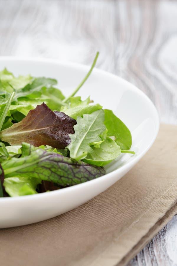 Salade de mélange de Mesclun dans la cuvette blanche photos libres de droits