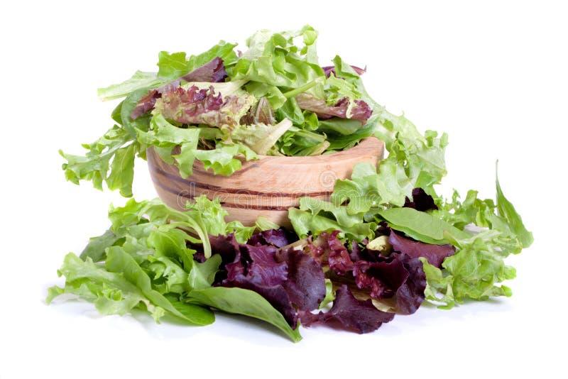 Salade de mélange de source photos libres de droits