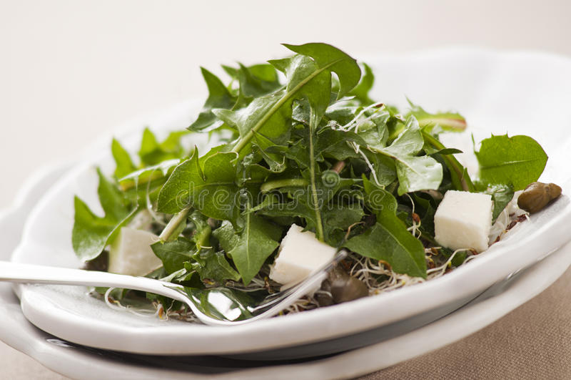 Salade de pissenlit image libre de droits