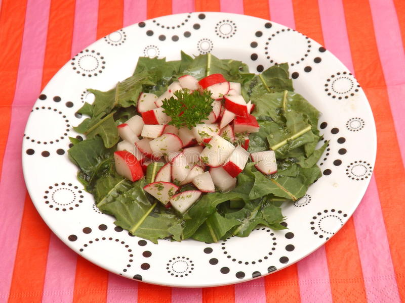 Salade de pissenlit images stock