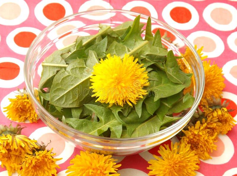Salade de pissenlit photos libres de droits