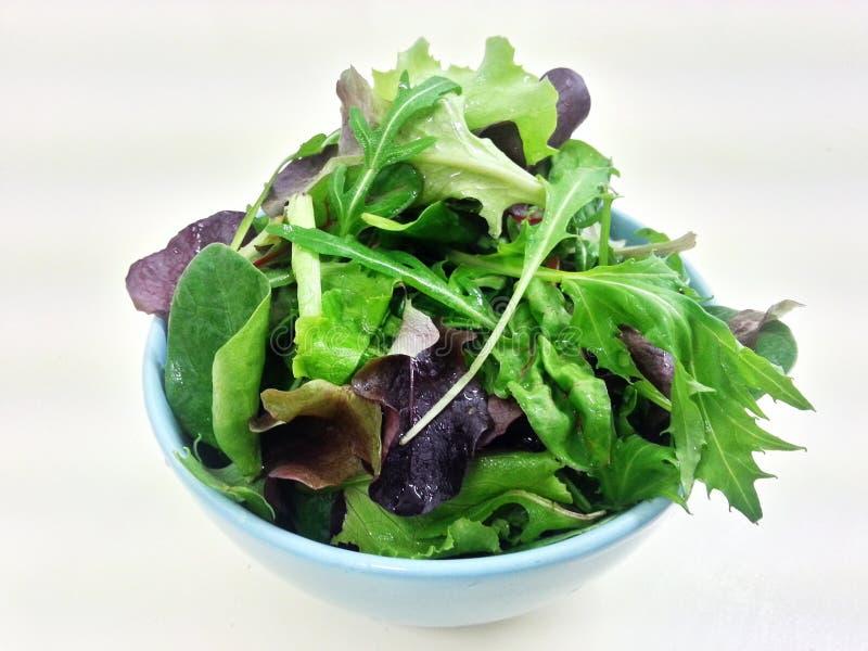Salade de verts hydraulique de légumes mélangés, nourriture propre, nourriture de régime, nourriture saine image libre de droits