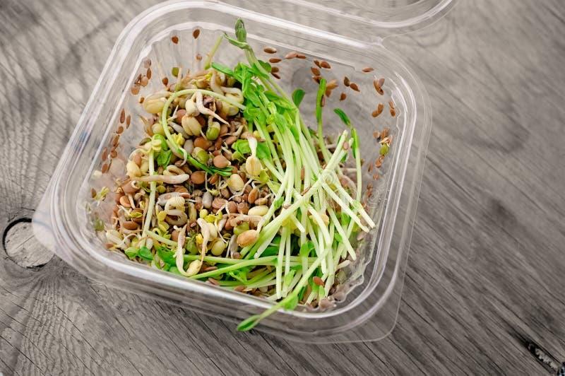 Salade des graines germ?es des lentilles de pois de lin et d'autres grains Concept macrobiotique de nourriture image stock
