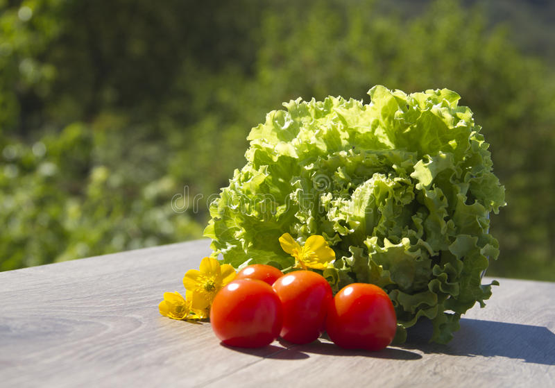 Salade en tomaten royalty-vrije stock afbeelding