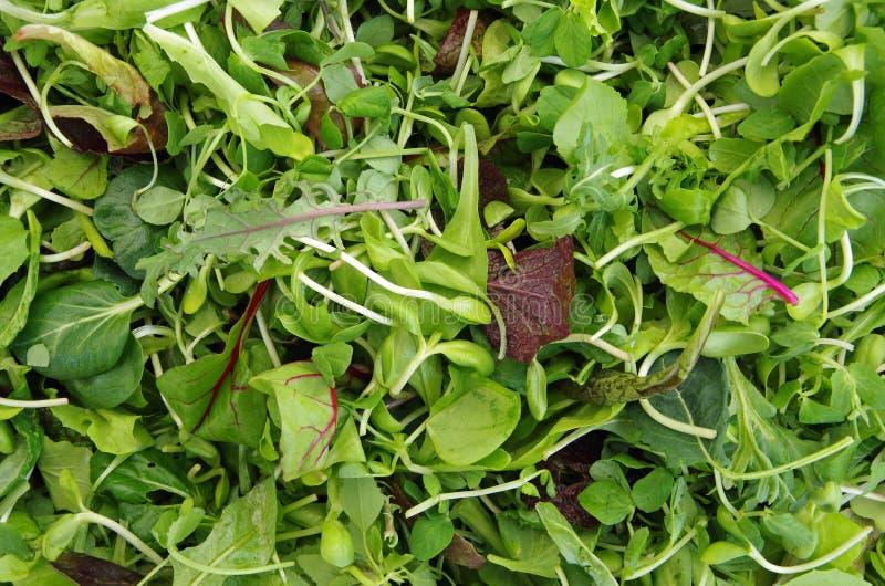 Salade Mesclun salade de légumes verts photo libre de droits