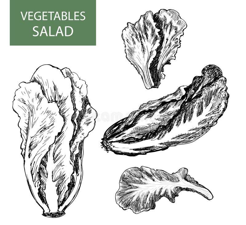 Salade - reeks van vectorillustratie vector illustratie