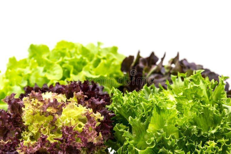 Salade saine sur le fond de blanc de n photographie stock