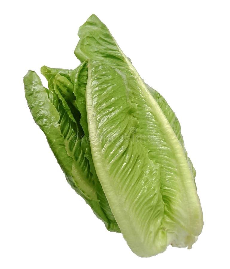 salade végétale verte fraîche de Cos Lettuce d'isolement sur le fond blanc photographie stock