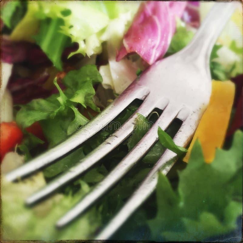 Salade verte _1 images libres de droits