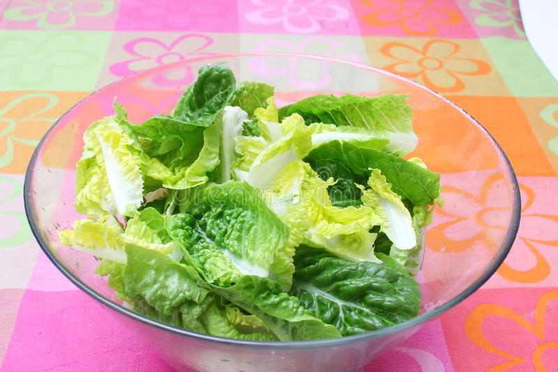 Salade verte fraîche photo stock
