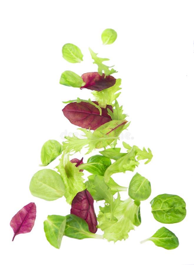 Salade verte fraîche de laitue de feuilles d'isolement sur le fond blanc image libre de droits