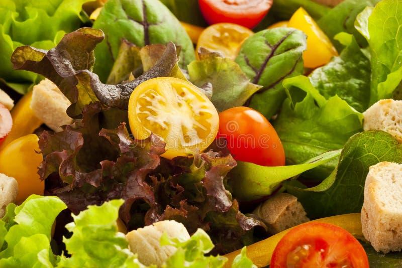 salade verte proche vers le haut photographie stock libre de droits