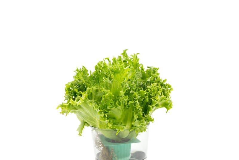 Saladebladeren in glas stock foto's