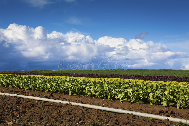 Download Saladegebied stock foto. Afbeelding bestaande uit farming - 39105374