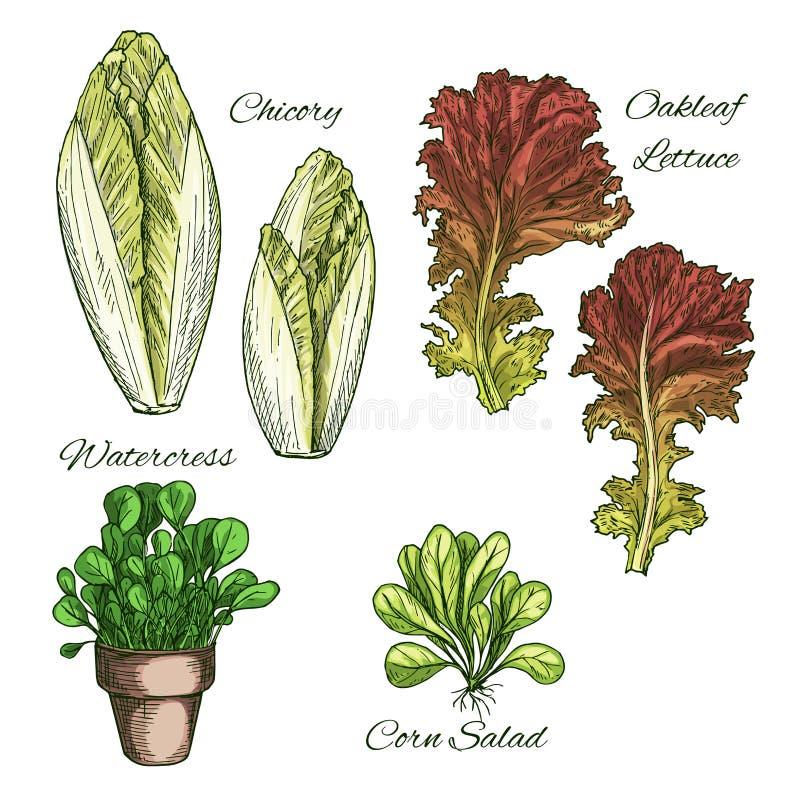 Salades en geplaatste bladgroenten vectorpictogrammen stock illustratie