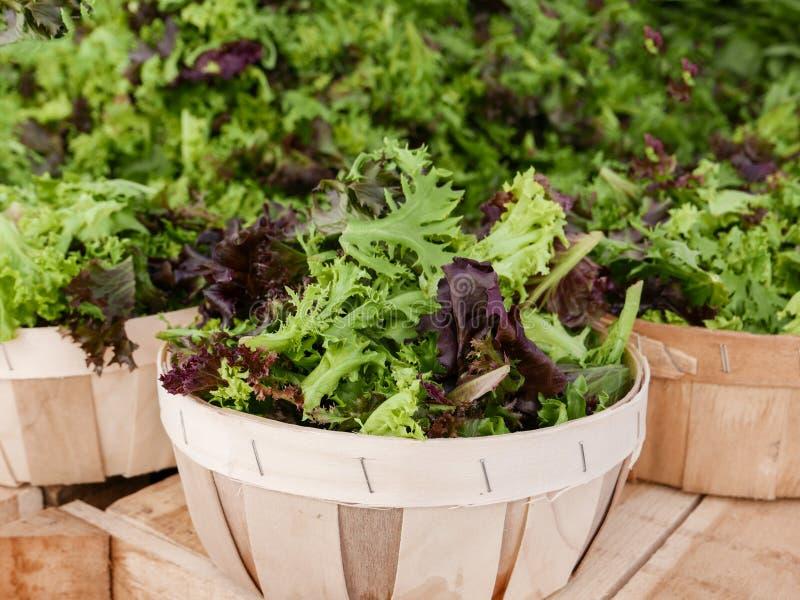 Salades vertes fraîches à vendre images stock
