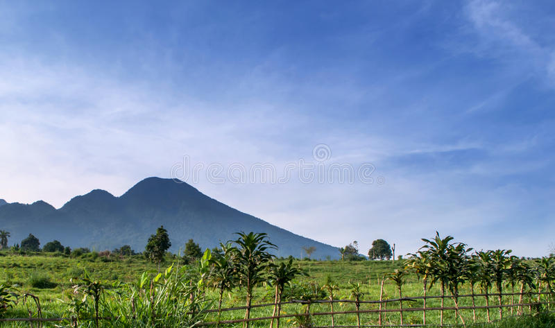 Download Salak mountain bogor stock image. Image of salak, green - 27852511