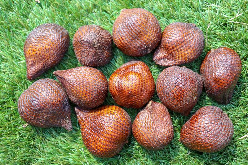 Salak pondoh is one of the salak cultivars that grow mostly in the area of Sleman. Sweet Salacca zalacca or Snake fruit isolated royalty free stock images