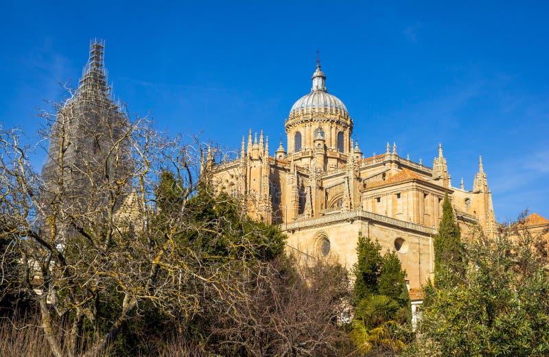 Download Salamanca Katedra Za Drzewami Zdjęcie Stock - Obraz złożonej z hiszpania, drzewa: 28960670