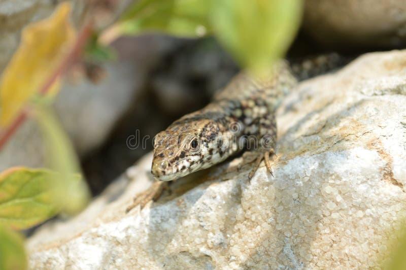 salamander стоковые фото