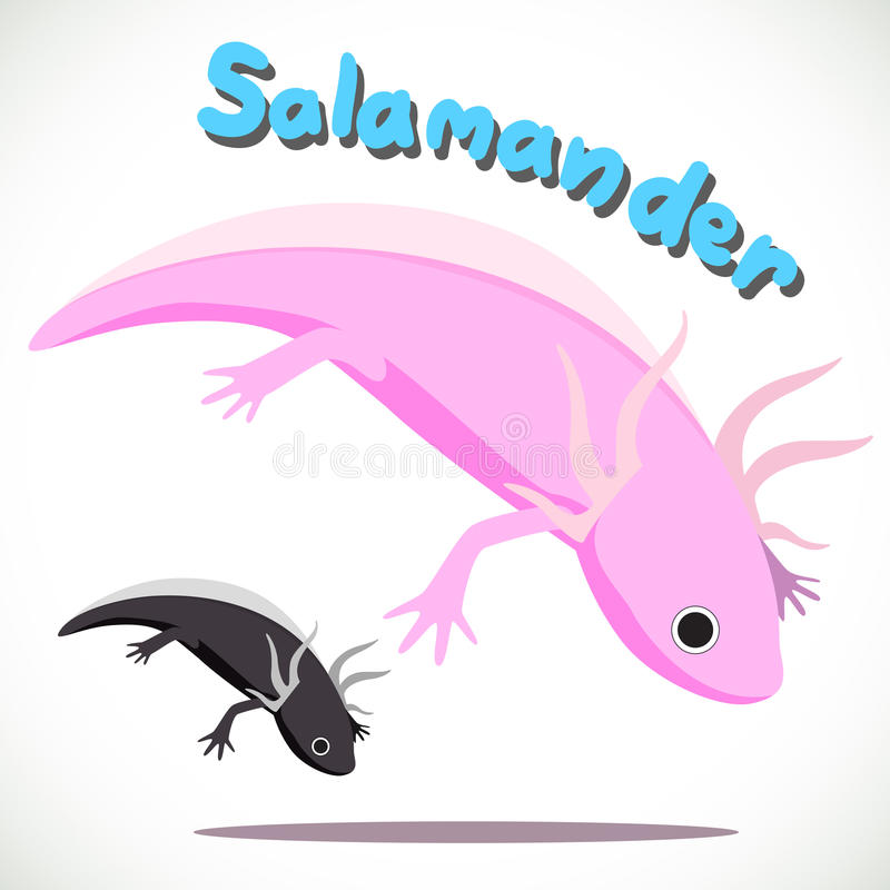 salamander royaltyfri illustrationer