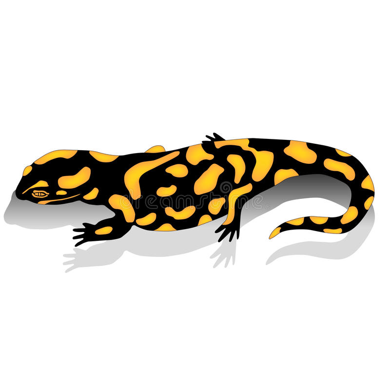 salamander stock illustrationer
