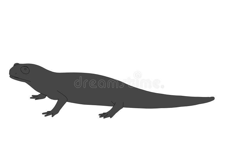 Salamander vector illustration