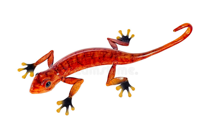 Salamander på vit royaltyfri bild