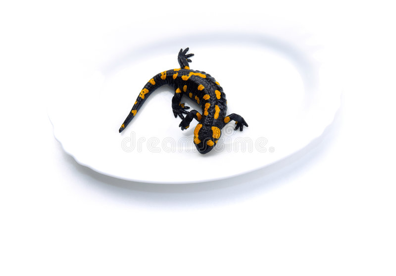 Download Salamander on plate stock photo. Image of animal, plate - 7797962