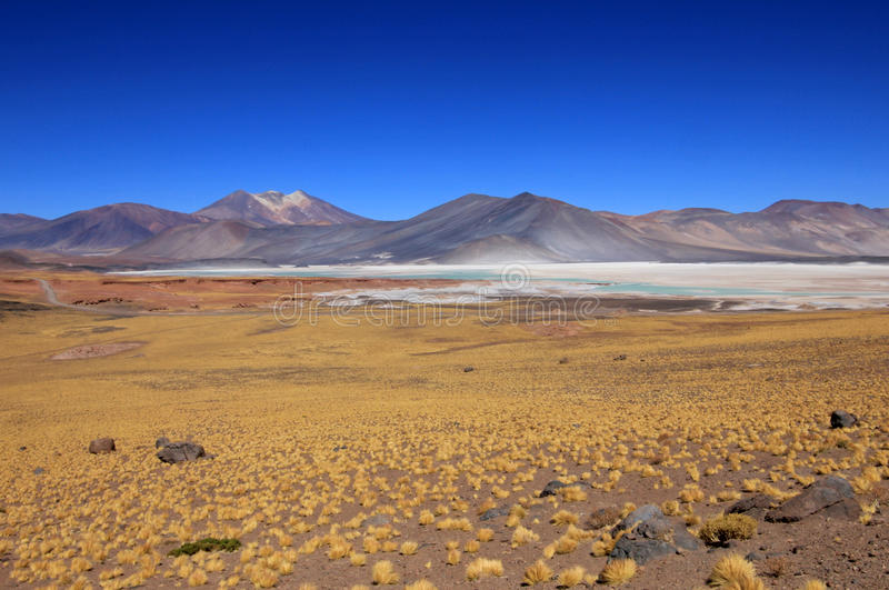 Salar Aguas Calientes, Atacama-woestijn, Chili royalty-vrije stock fotografie