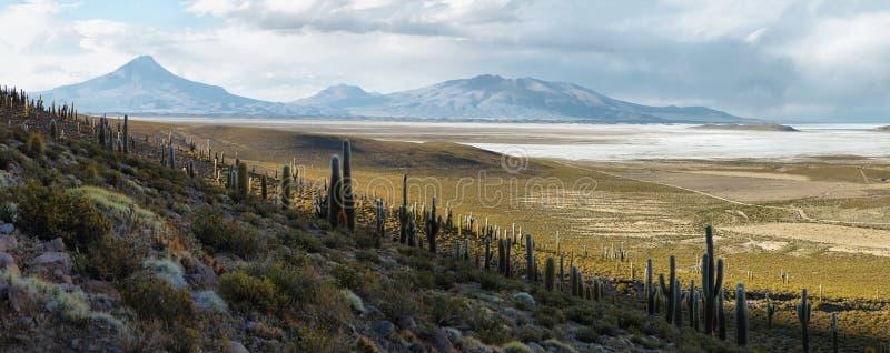 Salar de Coipasa Chile arkivfoto