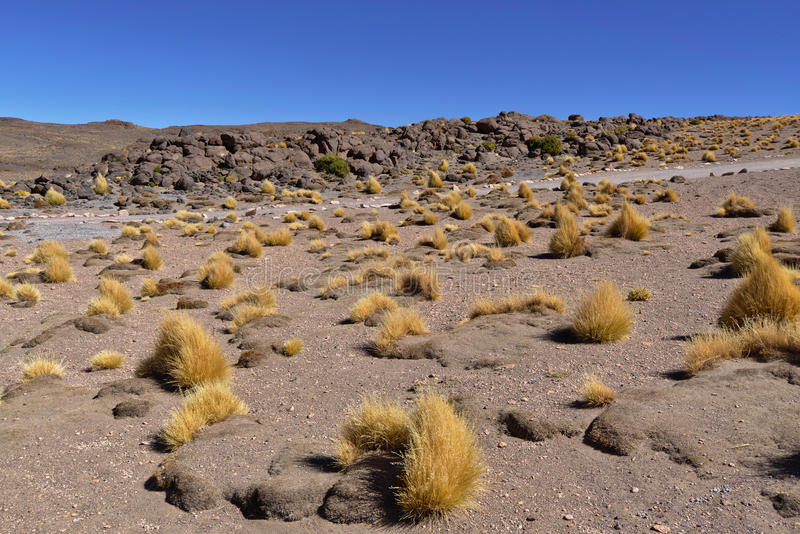 Salar de Tara Vegetation stock afbeeldingen