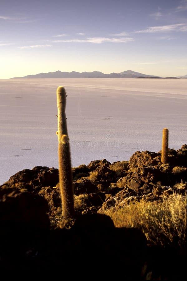 Salar de Uyuni- Bolivien stockbilder
