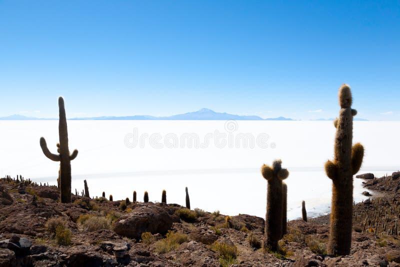 Salar de Uyuni view from Isla Incahuasi. Salar de Uyuni view from Incahuasi island, Bolivia. Largest salt flat in the world. Bolivian landscape, inka, was royalty free stock photo