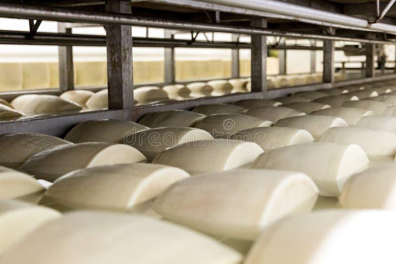 Salar el queso parmesano en fábrica en Italia fotos de archivo libres de regalías