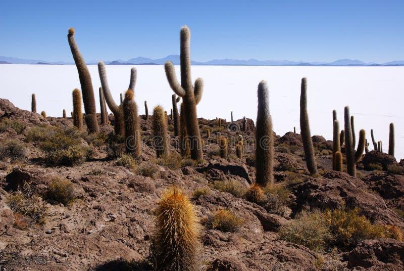 salar för bolivia de del islapescado uyuni arkivbild