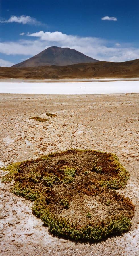 Salar För De-ökenmoss Uyuni Arkivfoto