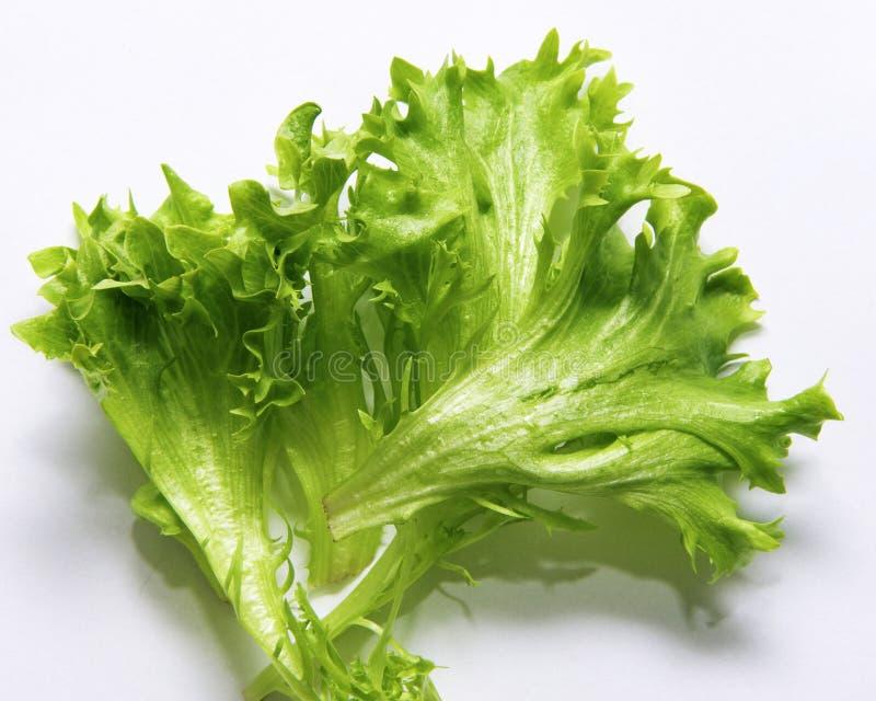 Salat стоковое фото