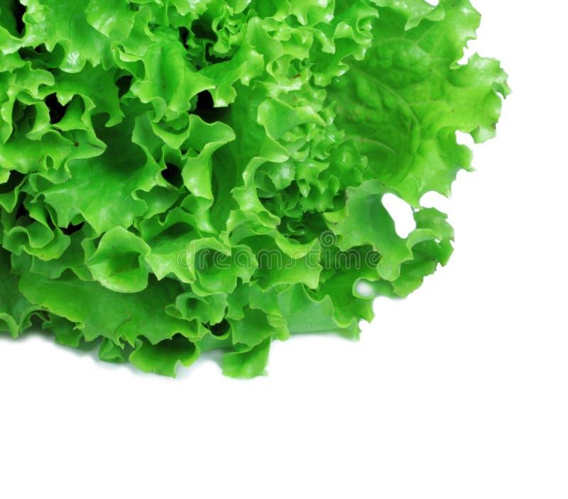 Salat lizenzfreie stockfotografie