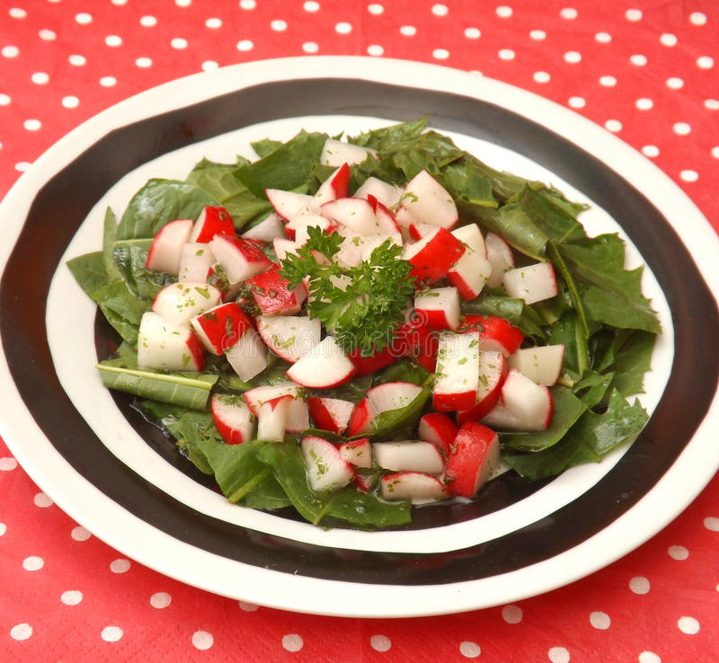 Salat des Löwenzahns lizenzfreies stockbild
