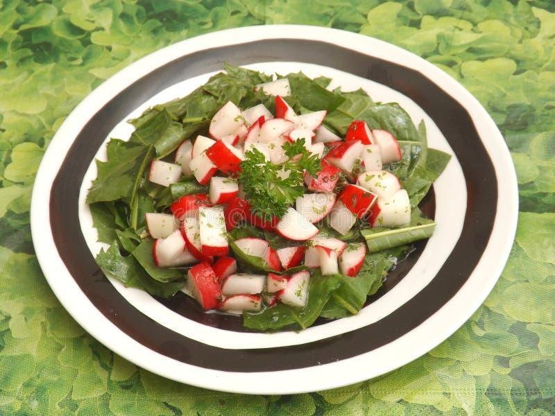 Salat des Löwenzahns stockfotografie